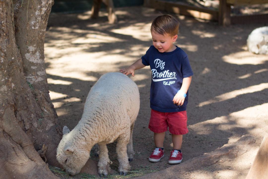 Blessington Farms petting zoo